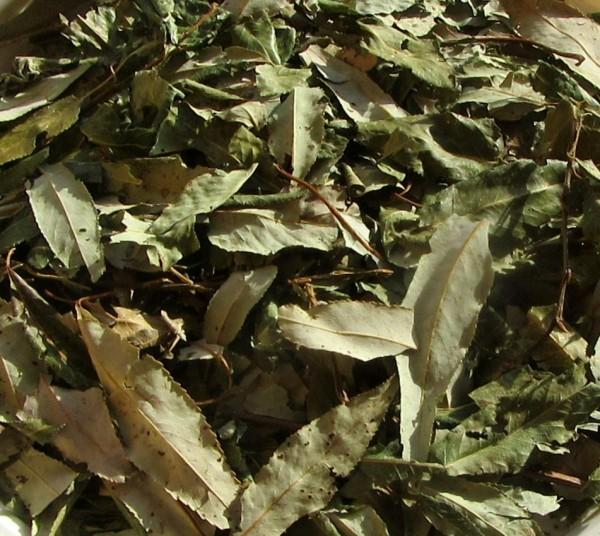 Weidenblätter