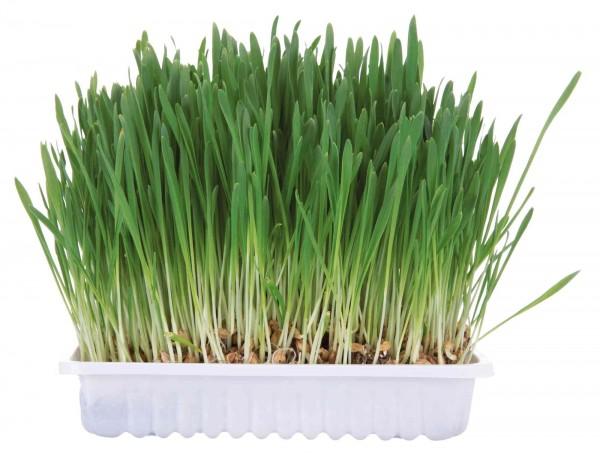 Nager-Gras - 100 g